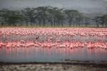 De 5 meest bekende toeristische bezienswaardigheden van Kenia