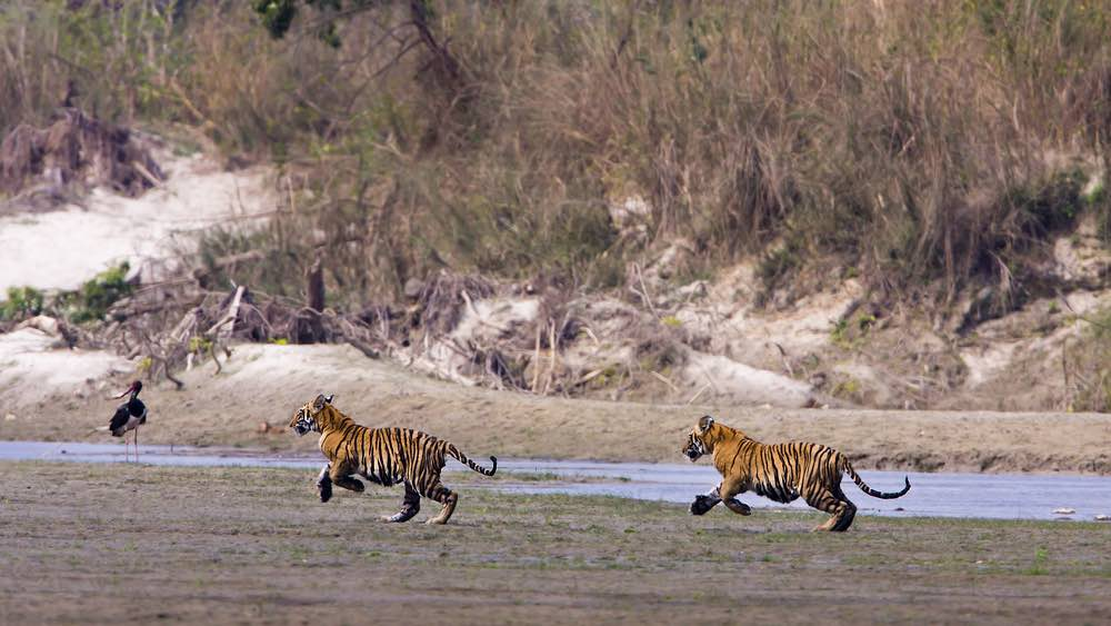 Royal Bardia National Park