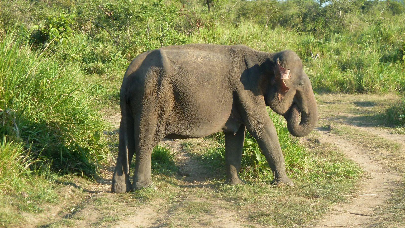 Yala National Park het natuurpark van Sri Lanka